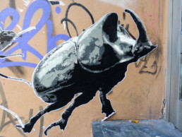 #0179 Rhinoceros Beetle