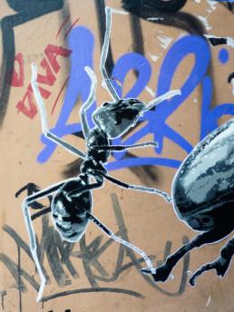 #0180 Giant Ant