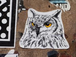 #0273 Eagle Owl