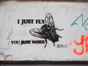 #0278 I just fly