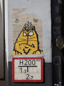 #0427 Angry Fat Cat